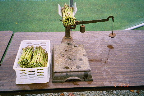 Asparagus and scale